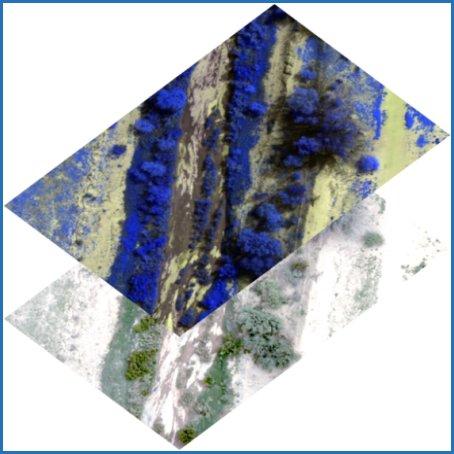 Satellite Imagery (Beaver Hills)